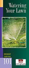 Drought Survival Guide - Watering Your Lawn