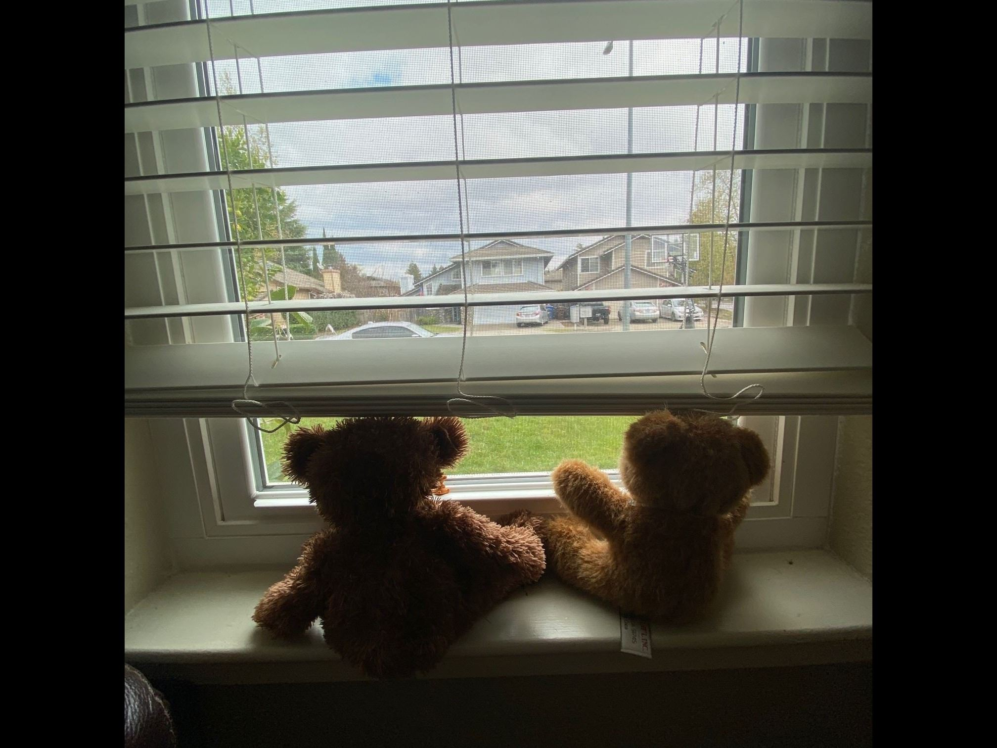 Two stuffed bears sitting in a window facing the front of a home.