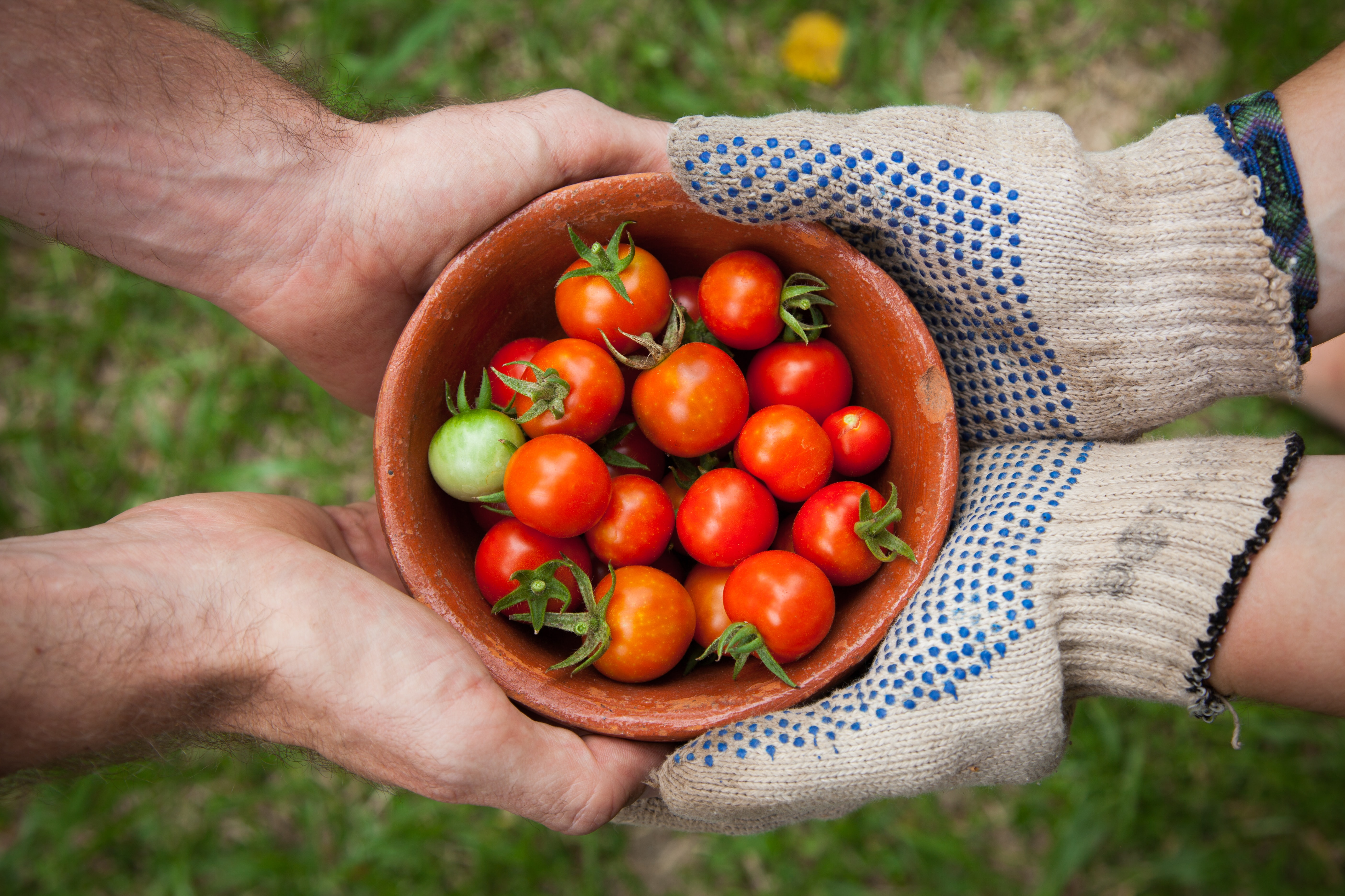 A close up of a small bowl of cherry tomatoes and two people holding the bowl together.